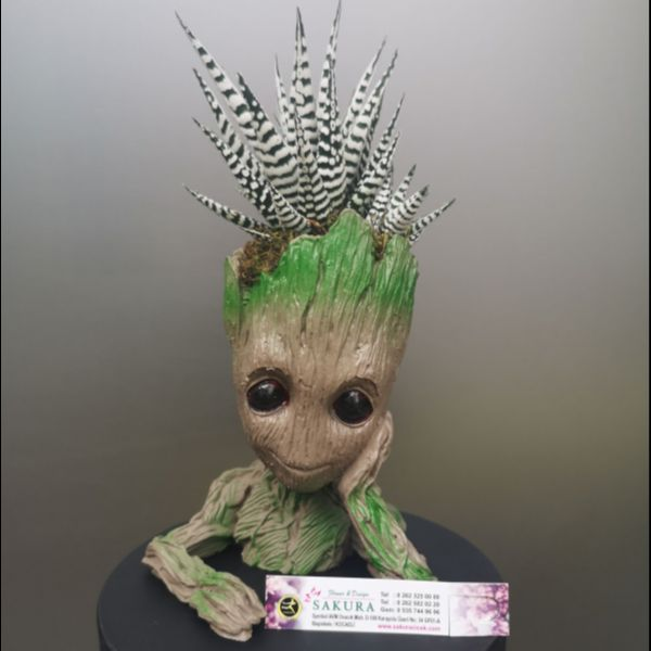 Baby Groot ve Hovartia Sukulent